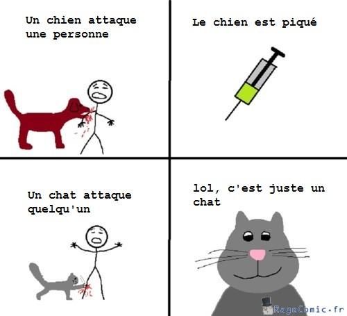Chat et chien VS humain