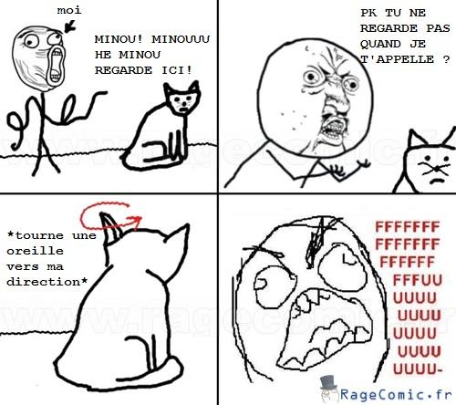 Le chat s'en fout